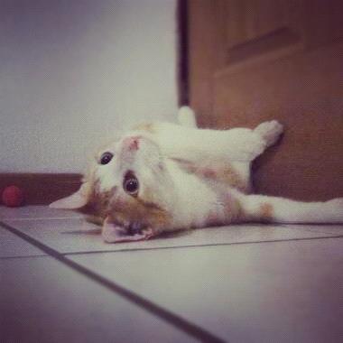 Gato Pibe rolando