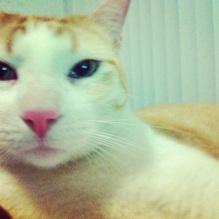 Gato Tango con Porte