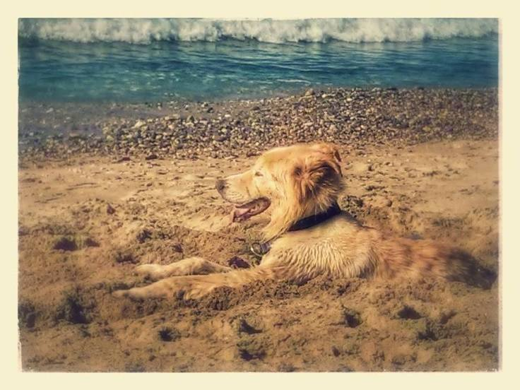 Beach-blissed in my self-dug cooling hole.
