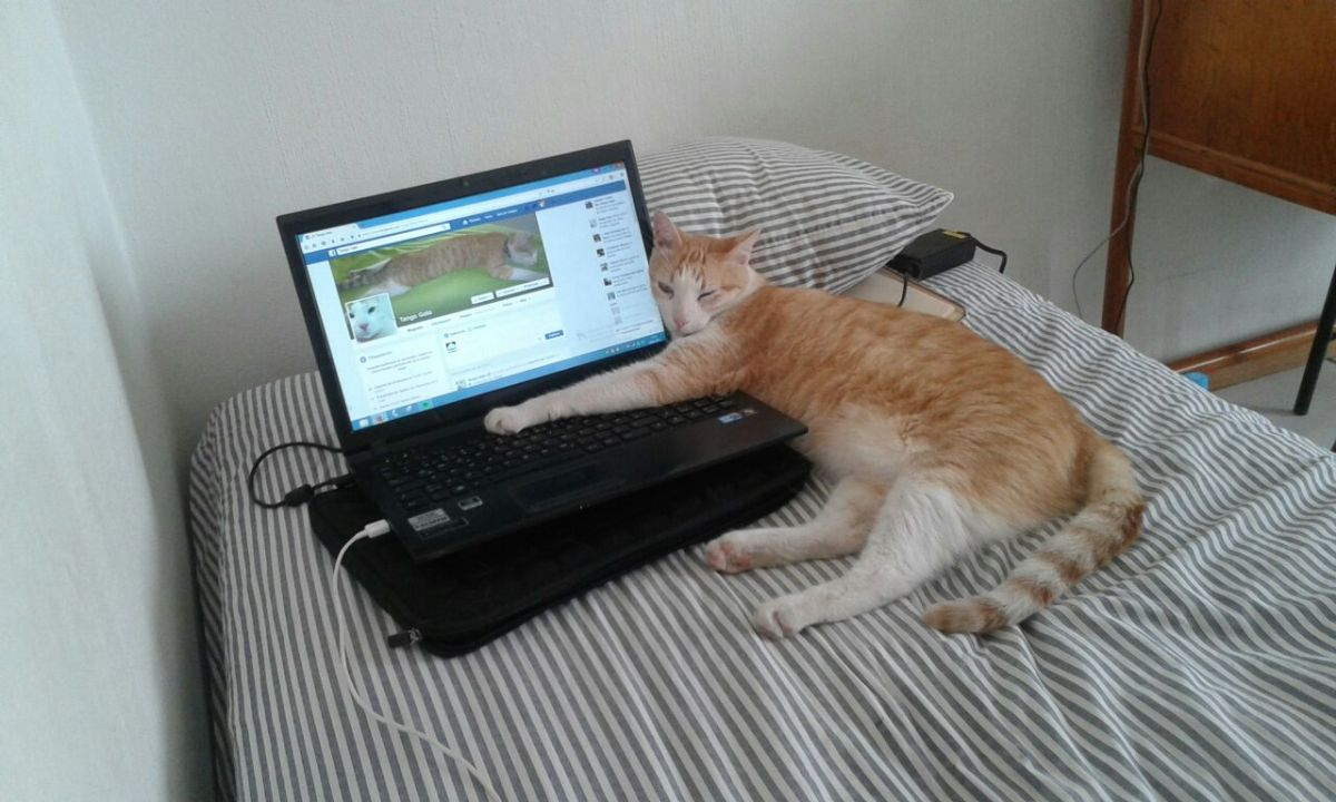 Que aburrido es el facebook para nosotros los gatos, mejor me duermo
